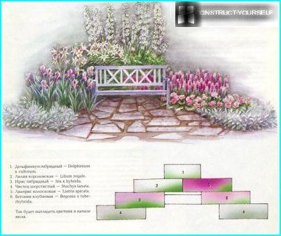 Kukkapenkki vaaleanpunaisilla ja lilaväreillä liljoilla