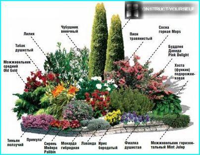 Upea kukkapenkki, jossa liljat ja havupuut