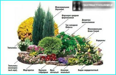 Stenete og horisontale einer på en blomsterbed