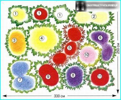 Schema di un letto di fiori con lobelia rosso