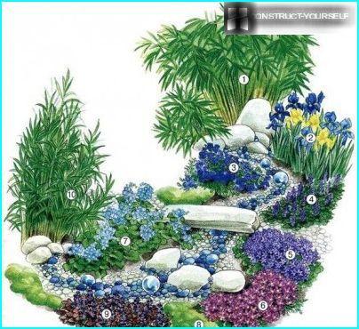 Blomstereng med blå lobelia ved dammen