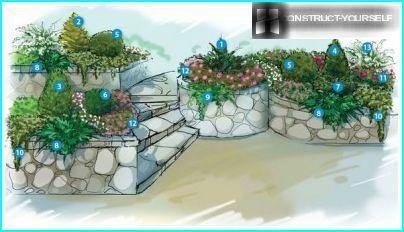 Einerplanting på støttemur