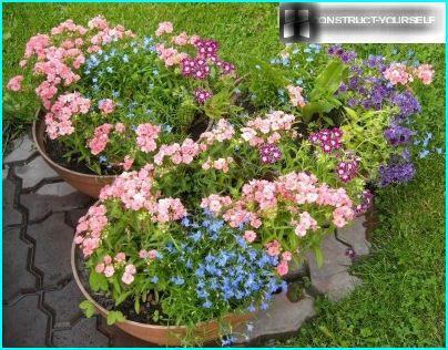 Farverig sammensætning med lobelier i blomsterpotter