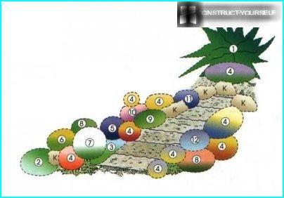 Shēma akmens dārzs ar kazaku kadiķi
