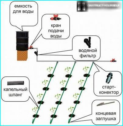 Pilienveida apūdeņošanas sistēmas izkārtojums siltumnīcā