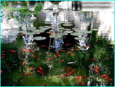 Im Frühjahr beginnen sie, Fische zu füttern
