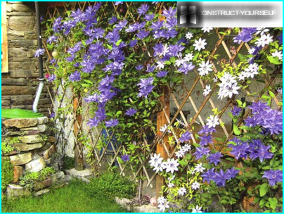 Spectacular trellis with clematis