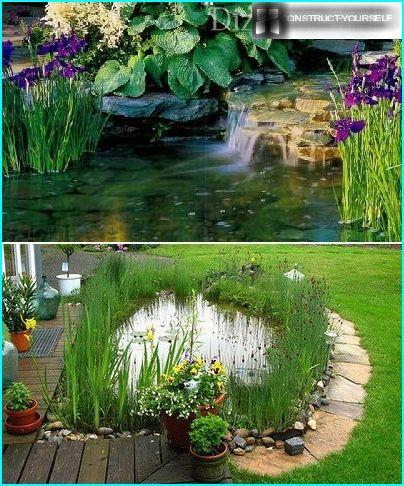 Vannelskende planter nær et reservoar