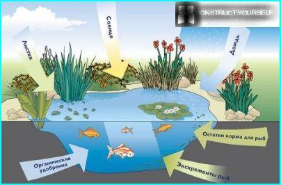 Ordning med gunstige faktorer for fiskeoppdrett