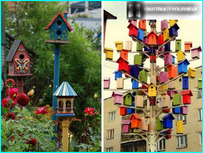 Houses for birds from different species of wood