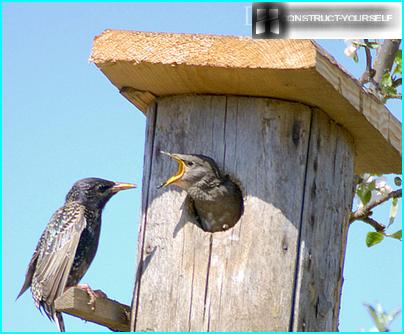 The optimum size of the birdhouses