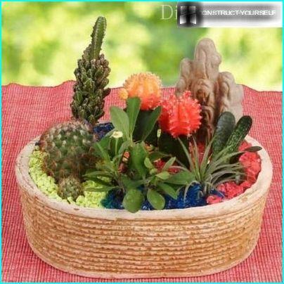 An arrangement of cacti