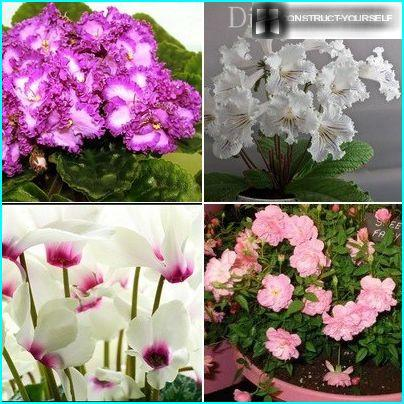 Smukke blomstrende planter til en mini-have