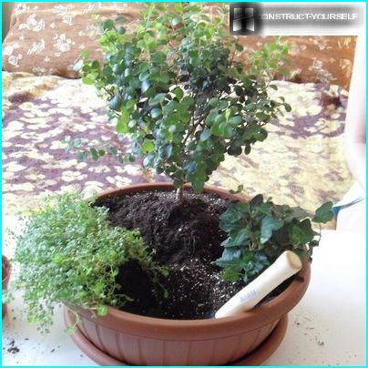The distance between plants mini garden