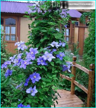 Hvordan vælger man en haver, som er bedre at købe, og hvorfor?