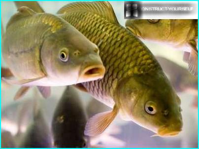 Nepretenciozas zivju sugas