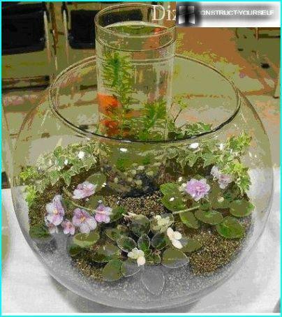 Saintpaulia akvaariossa