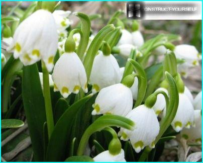 Kukkasänky ja liljat