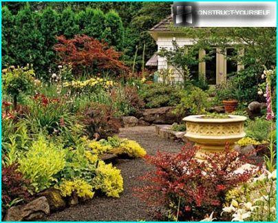 Des buissons d'épine-vinette au feuillage rougissant transforment le jardin