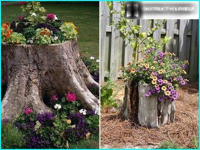 Vaso di fiori da un vecchio ceppo