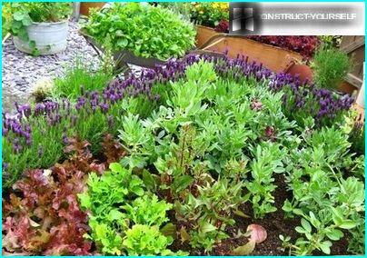 Farvekombinationen af grønt i haven