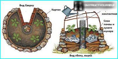 Plan the garden